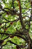 Bijenkorf opknoping over een boom in india — Stockfoto