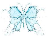 Motýl stříkající vodě — Stock fotografie