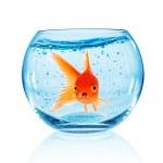 Goldfish in aquarium — Stock Photo #31410569