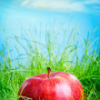 Apple on the grass — Stock Photo