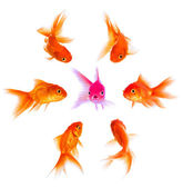 Concept with goldfish — Stock Photo