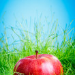 Apple on the grass — Stock Photo