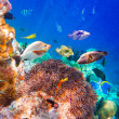 Tropical Coral Reef. — Stock Photo