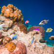 Tropical Coral Reef. — Stock Photo #44528623