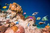 Tropiska korallrev. — Stockfoto