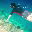 Snorkeler diving swimming under water — Stock Video #46222085