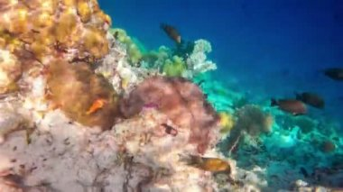 Tropical saltwater fish — Stock Video