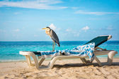 Grey Heron on a sun lounger — Stock Photo