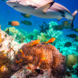 Tropical Coral Reef. — Stock Photo #49120661
