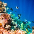 Tropical Coral Reef. — Stock Photo #49120673