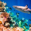 Tropical Coral Reef. — Stock Photo #49120697