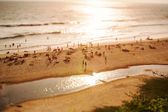 Timelapse Beach on the Indian Ocean. India (tilt shift lens). — Stock Photo