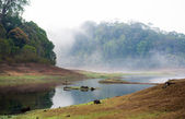 India Kumily, Kerala, India - National park Periyar Wildlife San — Stock Photo
