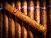 Zigarren im humidor — Stockfoto