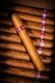 Cigarrer i humidor — Stockfoto