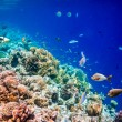 Tropical Coral Reef. — Stock Photo #51408089