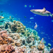 Tropical Coral Reef. — Stock Photo #51408093