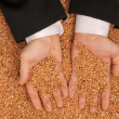 Crop wheat — Stock Photo #12757985