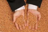 Crop wheat — Stock Photo