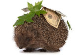 Hedgehog with money profit — Stock Photo