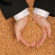Crop wheat — Stock Photo #13150103