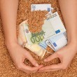 Stock Photo: Monetary crop
