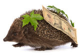 Hedgehog with dollars profit — Stock Photo
