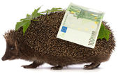Hedgehog with euro profit — Stock Photo