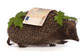 Hedgehog with euro profit — Stock Photo