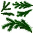 Set of Christmas tree fir branches — Stockfoto