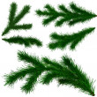 Stock Photo: Set of Christmas tree fir branches