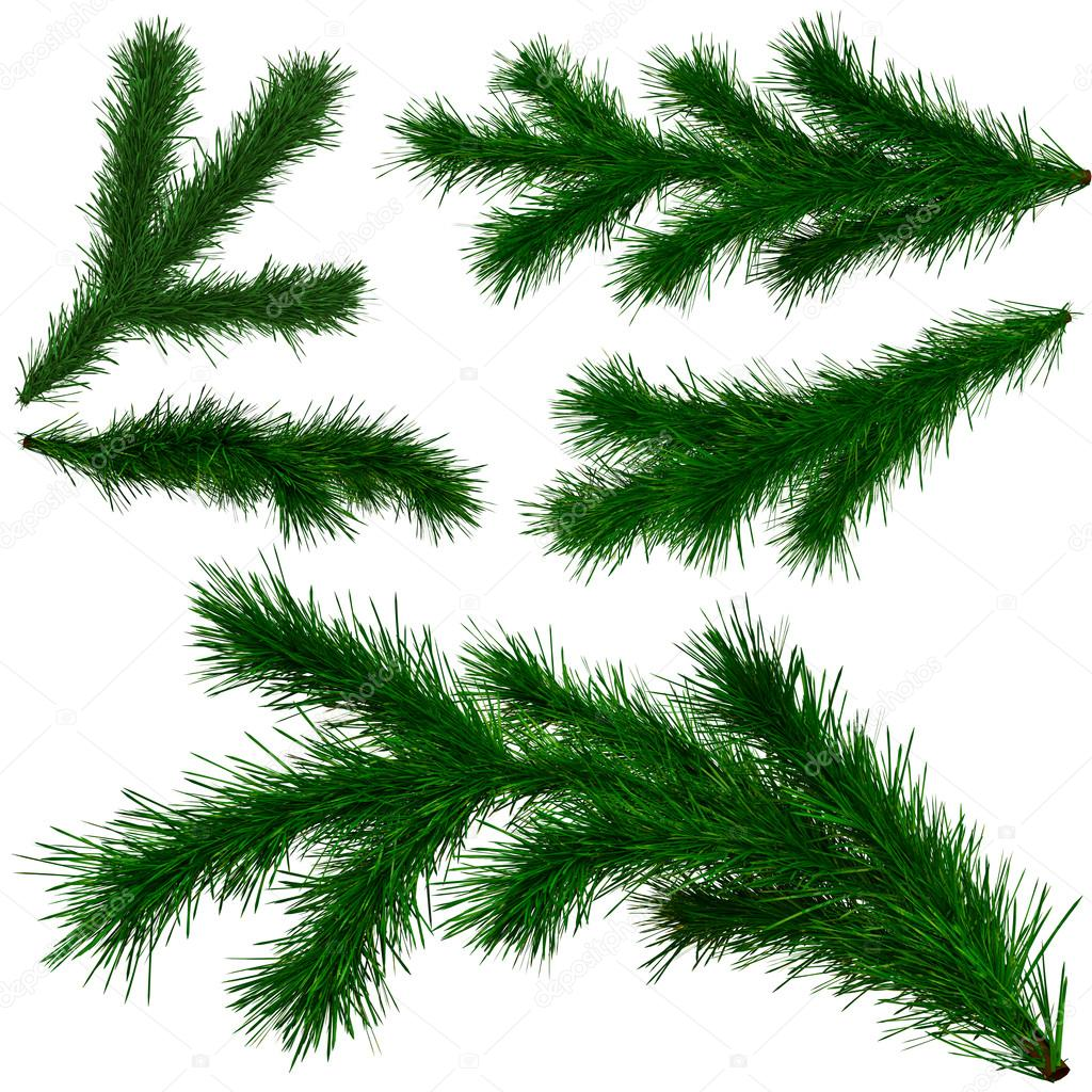 Set of Christmas tree fir branches on white background — Stock Photo #14067657