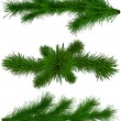 Set of Christmas green fir-tree branches — Stock fotografie