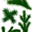 Set of Christmas green fir-tree branches - Stock Photo