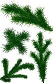 Set of Christmas green fir-tree branches — Stock Photo