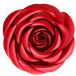 Red rose for Valentine's Day — Stock Photo