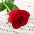 Red rose and music — Stock Photo