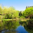 Pond in park landscape — Stock Photo