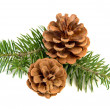 Pine cones — Stock Photo #31076831