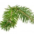 Christmas tree branch — Stock Photo