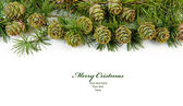 Christmas evergreen tree background — Stock Photo
