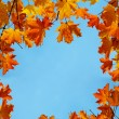Autumn maple leaves — Stock Photo #31978559
