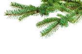 Rama del árbol de navidad — Foto de Stock