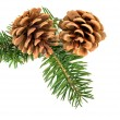 Christmas pine cones — Stock Photo #36612929