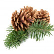Pine cones on branch — 图库照片