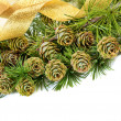 Stock Photo: Evergreen tree branch