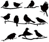 Silhouettes bird on a branch — Vetor de Stock