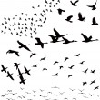 Silhouette a flock of birds - Stok Vektör