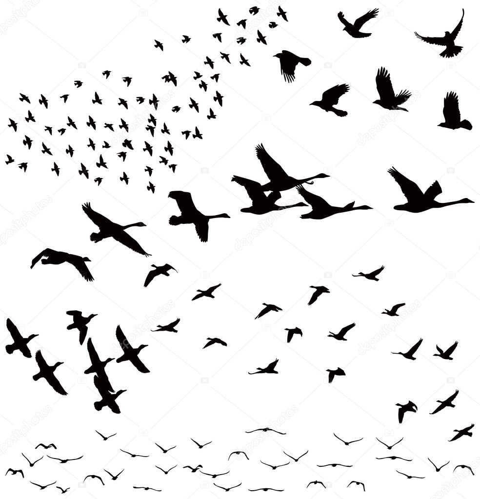 Vector silhouettes a f...