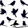 Stock Vector: Bird silhouettes